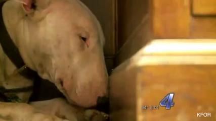News video: Loyal Dog That Refused To Leave Dead Owner's Side Is Now Grieving In Shelter